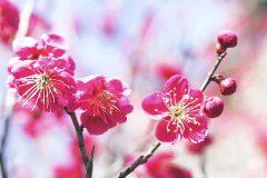 この春行きたい!京都にある梅の名所3選