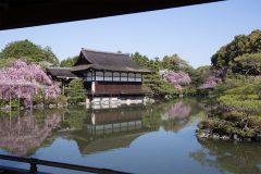 桜の名所!平安神宮神苑