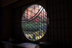 もみじが美しい苔の虹寺 光明院